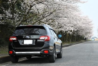 Sakura2019_03