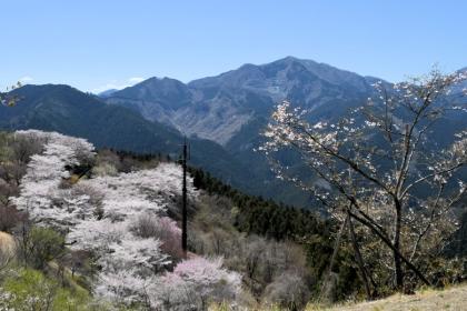 Sakura2019_v2_02