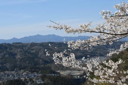 Sakura2019_v2_06