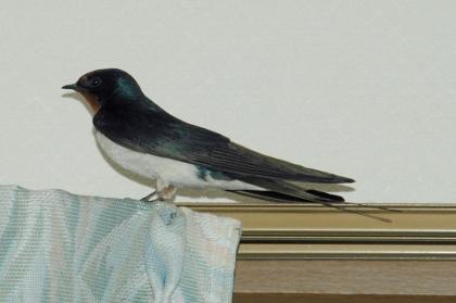 20090419