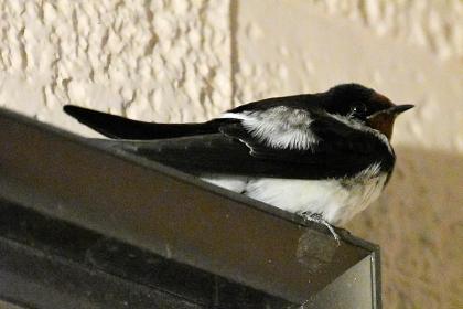 Sparrow202004_03