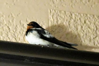 Sparrow202004_s